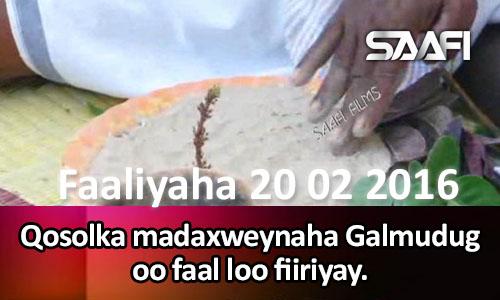 Photo of Faaliyaha Qaranka 20 02 2016 Qosolka Madaxweynaha Galmudug oo faal loo fiiriyay