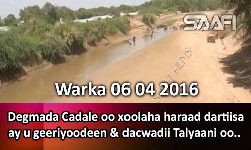 Photo of Warka 06 04 2016 Degmada Cadale oo xoolaha haraad dartiisa ay u geeriyoodeen & dacwadii Talyaani oo..