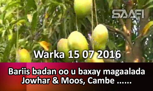 Photo of Warka 15 07 2016 Bariis badan oo u baxay magaalada Jowhar kadib soo laabashadii wabiga…