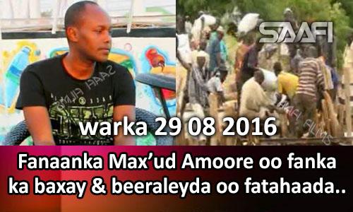 Photo of Warka 29 08 2016 Fanaanka Maxa'ud Amoore oo fanka ka baxay & beeraleyda oo fatahaada…
