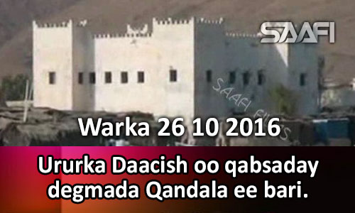 Photo of Warka 26 10 2016 Ururka Daacish oo qabsaday degmada Qandala ee gobolka bari.