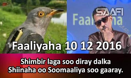 Photo of Faaliyaha 10 12 2016 Shimbir laga soo diray dalka Shiinaha oo Soomaaliya soo gaaray.