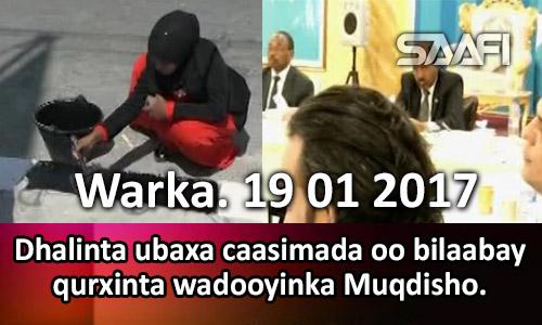 Photo of Warka 19 01 2017 Dhalinta ubaxa caasimada oo bilaabay qurxinta wadooyinka Muqdisho.