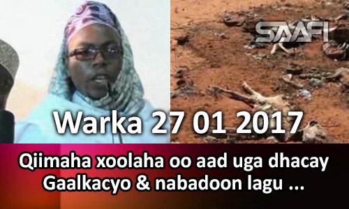 Photo of Warka 27 01 2017 Qiimaha xoolaha oo aad uga dhacay Gaalkacyo & nabadoon lagu ….
