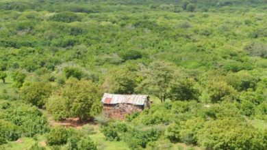 Photo of Security agents destroy three Shabaab camps in Boni Forest