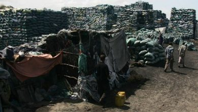Photo of UN Urges KDF To Stop Somalia Charcoal Export