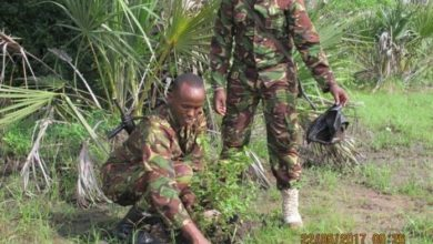 Photo of Operation Linda Boni Intensifies Hunt For Al Shabaab Spies Posing As Returnees