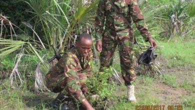 Photo of Kenyan Forces Kill 3 Al-Shabaab Militants