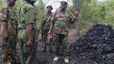 Charcoal, Illegal Logging Fund Al Shabaab Militants Hiding In Boni Forest