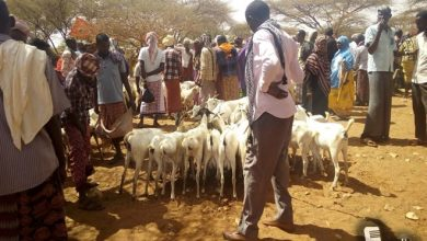 Photo of Mobile money baffles pastoralists in central Somalia