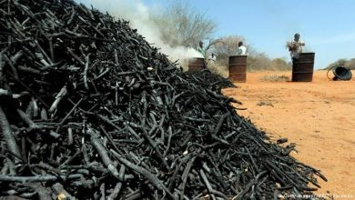Photo of Somalia's illicit charcoal trade threatens security, the environment and livelihoods