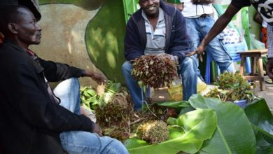 Photo of Governor orders ban on miraa, muguka sale and chewing