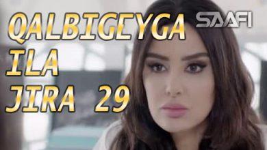 Photo of Qalbigeygaa Ila Jira Part 29