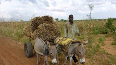 Photo of Kenya shuts livestock markets along borders with Somalia, Tanzania