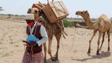 Photo of Mobile camel libraries keep children from forced labour
