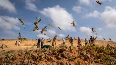 Photo of COVID-19, floods and locusts risk to Somalia's stability – UN
